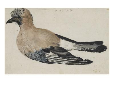 Oiseau dit casse-noix-Albrecht D?rer-Giclee Print