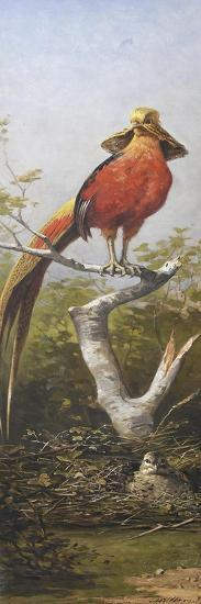 Oiseau exotique rouge-Adolphe Yvon-Giclee Print