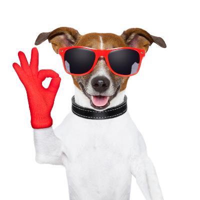 Ok Fingers Dog-Javier Brosch-Photographic Print