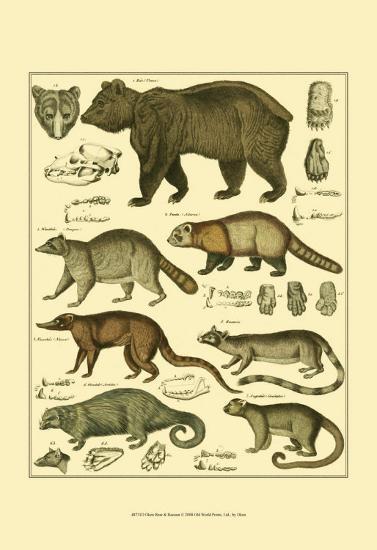 Oken Bear and Racoon-Lorenz Oken-Art Print