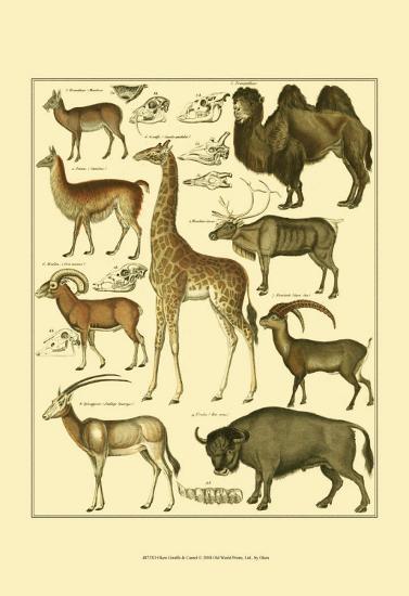 Oken Giraffe and Camel-Lorenz Oken-Art Print