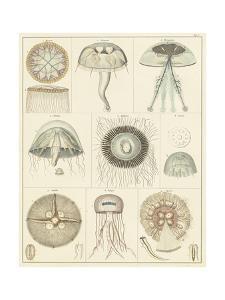 Jellyfish Display by Oken