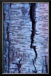Abstract Birch Tree Bark Pattern in Winter by Olaf Broders