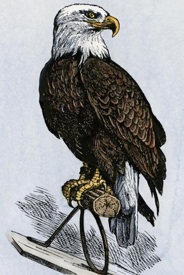 Old Abe, the Bald Eagle Mascot of Wisconsin's Iron Brigade, US Civil War--Giclee Print