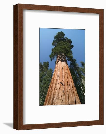 Old As Ages--Framed Art Print