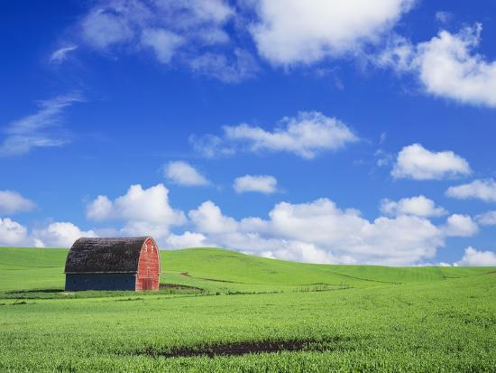 Old Barn Amidst Pea Field-Terry Eggers-Photographic Print