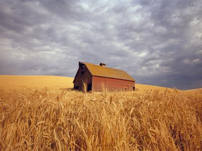 Old Barn Amidst Wheat Field-Craig Tuttle-Photographic Print