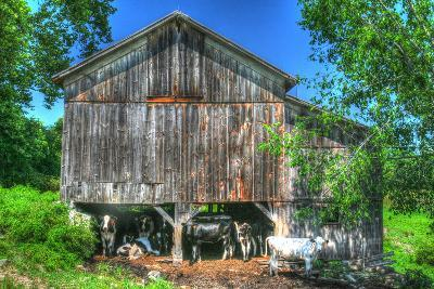 Old Barn and Cows-Robert Goldwitz-Photographic Print