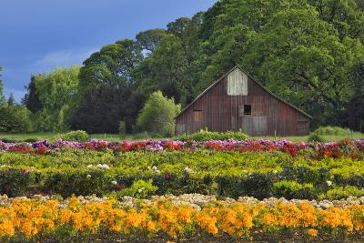 Old Barn and Flower Nursery, Willamette Valley, Oregon, USA-Jaynes Gallery-Photographic Print