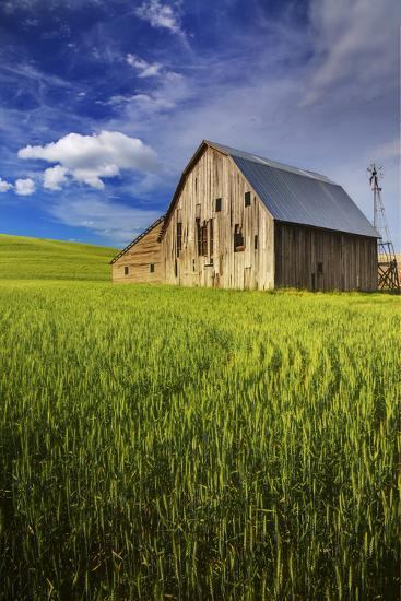 Old Barn Surrounded by Spring Wheat Field, Pr-Terry Eggers-Photographic Print