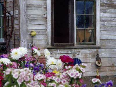 Old Barn with Cat in the Window, Whitman County, Washington, USA-Julie Eggers-Photographic Print
