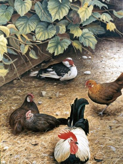 Old Barnyard Chickens-Kevin Dodds-Giclee Print