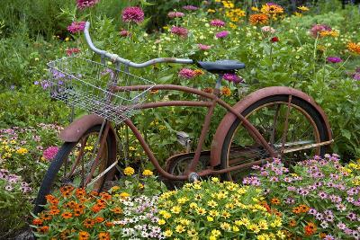 Old Bicycle with Flower Basket in Garden with Zinnias, Marion County, Illinois-Richard and Susan Day-Photographic Print
