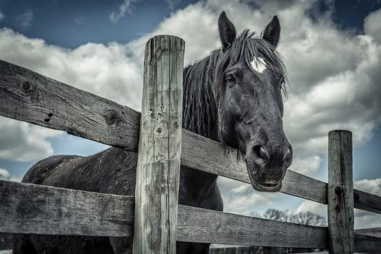 Old Black Horse-Stephen Arens-Photographic Print