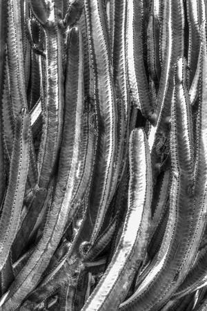 https://imgc.artprintimages.com/img/print/old-cactus-4_u-l-q10pnba0.jpg?p=0