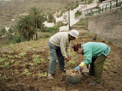 Old Couple Gathering Potatos in a Small Garden on the Island of La Gomera-xPacifica-Photographic Print
