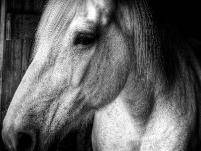 Old Friend-Stephen Arens-Photographic Print