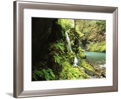 Old-Growth Rainforest, Graves Creek Tributary, Olympic National Park, Washington State, USA-Stuart Westmorland-Framed Photographic Print