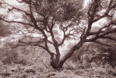 https://imgc.artprintimages.com/img/print/old-oak-tree-in-the-oakland-hills_u-l-pj57f50.jpg?p=0