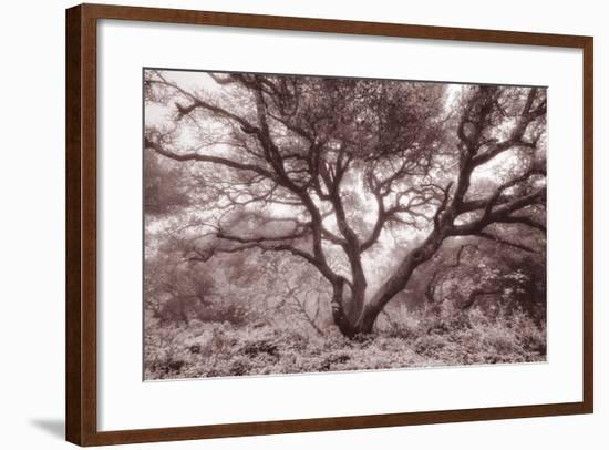Old Oak Tree in the Oakland Hills-Vincent James-Framed Photographic Print