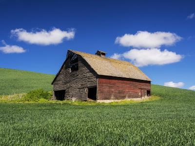 Old Red Barn in a Field of Spring Wheat-Terry Eggers-Photographic Print