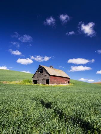 https://imgc.artprintimages.com/img/print/old-red-barn-in-a-field-of-spring-wheat_u-l-pzquh60.jpg?p=0