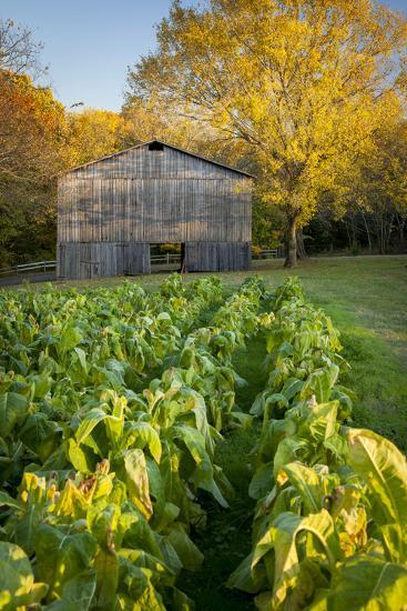 Old Tobacco Farm Along the Natchez Trace, Tennessee, USA-Brian Jannsen-Photographic Print