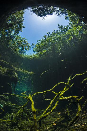 Old Tree Branches On The Floor Of Cenote Pool, Beneath The Forest Canopy With Snell'S Window Effect-Alex Mustard-Photographic Print