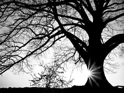 Old Tree-PhotoINC-Photographic Print