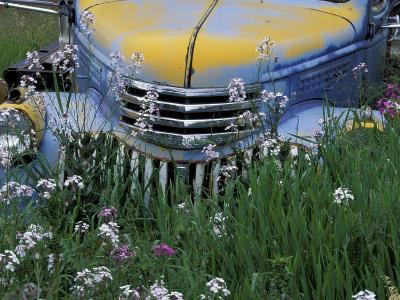 Old Truck with Money Plant in Palouse Area, Eastern Washington, USA-Darrell Gulin-Photographic Print
