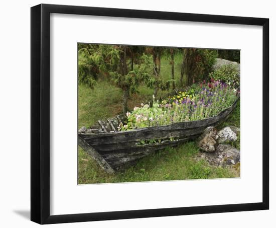Old Wooden Boat Used as a Flower Planter-Keenpress-Framed Photographic Print