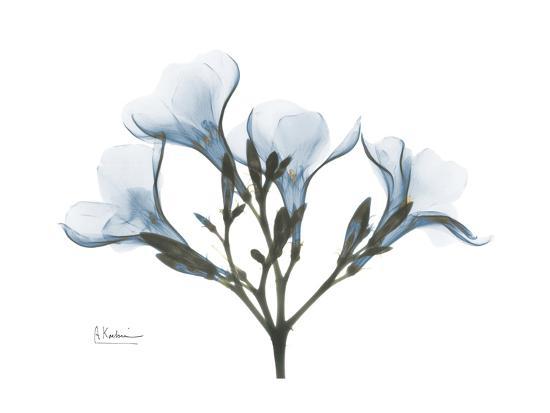 Oleander Portrait-Albert Koetsier-Premium Giclee Print