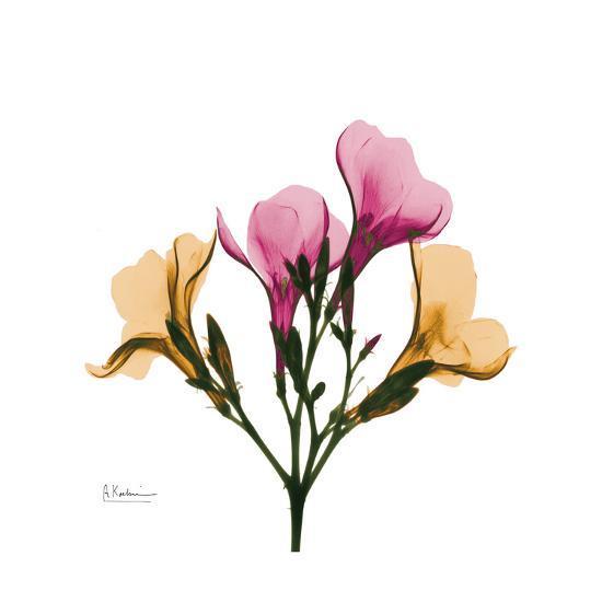 Oleander Portrait-Albert Koetsier-Art Print