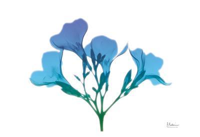 https://imgc.artprintimages.com/img/print/oleander-turq-indigo_u-l-f8iwvc0.jpg?p=0