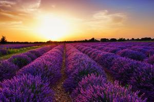 Stunning Landscape with Lavender Field at Sunset. Plateau of Valensole, Provence, France by Oleg Znamenskiy