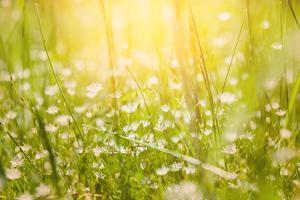 Green Grass on the Field by Olga Gavrilova
