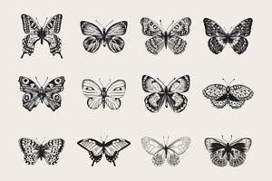 Set of Butterflies. Vector Vintage Classic Illustration. Black and White by Olga Korneeva