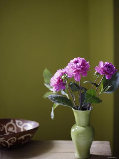 Olive Ambiance, Plum Dahlias--Photo