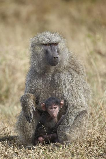 Olive Baboon (Papio Cynocephalus Anubis) Infant and Mother-James Hager-Photographic Print