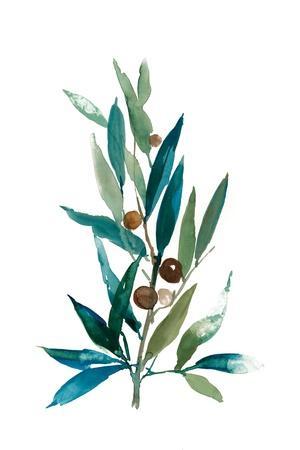 https://imgc.artprintimages.com/img/print/olive-branch-i_u-l-pzqduh0.jpg?p=0