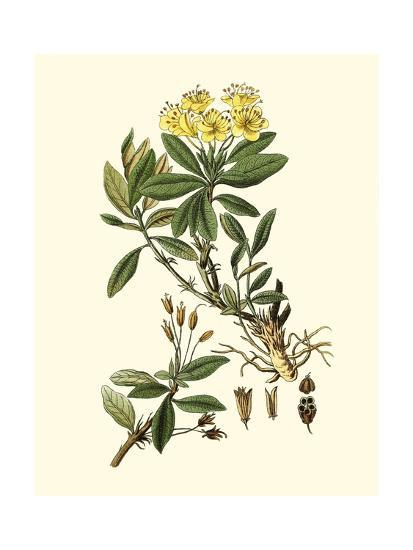 Olive Greenery IV-0 Unknown-Art Print