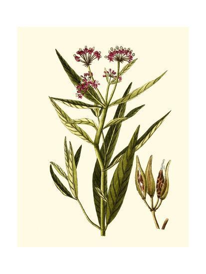 Olive Greenery VIII-0 Unknown-Art Print