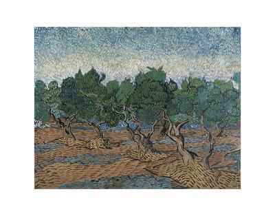 Olive Grove, 1889-Vincent van Gogh-Art Print