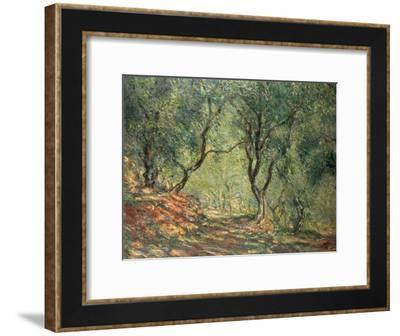 Olive Grove in the Moreno Garden, 1884-Claude Monet-Framed Giclee Print