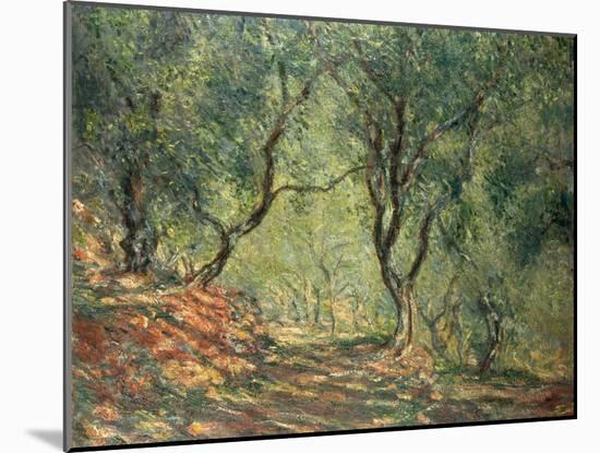 Olive Grove in the Moreno Garden, 1884-Claude Monet-Mounted Giclee Print