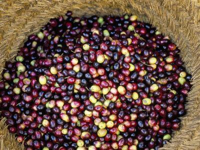 https://imgc.artprintimages.com/img/print/olive-harvest-meknes-region-morocco-north-africa-africa_u-l-p1m6vt0.jpg?p=0