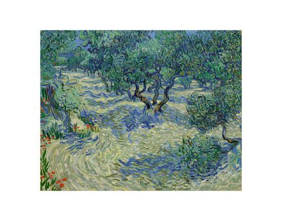 Olive Orchard, 1889-Vincent van Gogh-Art Print