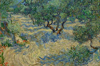 Olive Orchard-Vincent van Gogh-Wall Mural