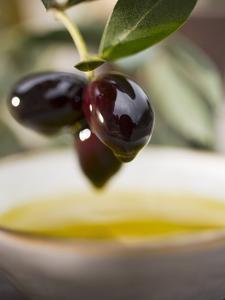 Olive Sprig with Black Olives over Bowl of Olive Oil