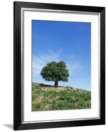 Olive Tree, Crete, Greece-Doug Pearson-Framed Photographic Print